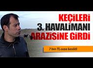 3. HAVALİMANI'NA GİREN KEÇİLERE CEZA!