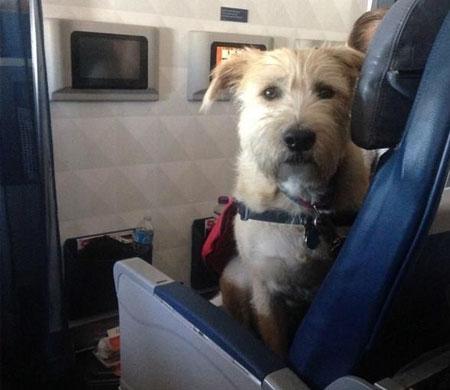 THY Almanya varışlı uçuşlarda evcil hayvan taşınmayacağını duyurdu