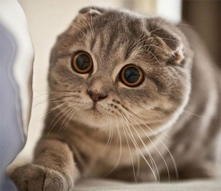 Sabiha Gökçen'de kedi operasyonu
